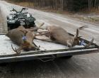 deer_10