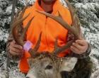 deer_14